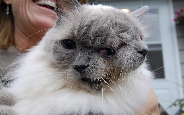 Двуликий кот Янус