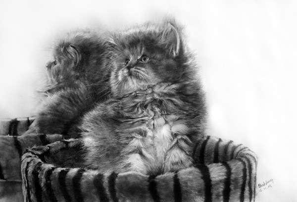 Рисунок в карандаше или кошки на ватмане