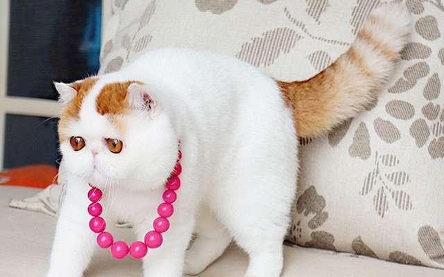 Глазастый кот Снупи